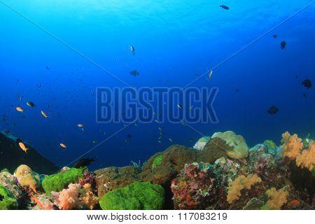 Coral reef fish underwater sea ocean