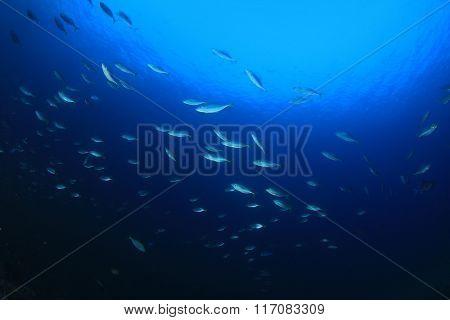 Fish underwater ocean blue background