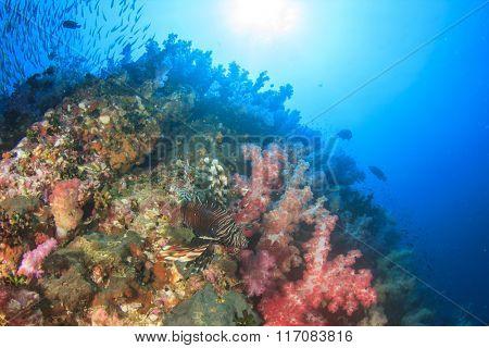 Fish coral reef sea ocean underwater