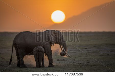 Female Elephant With Youngster At Sunset In Amboseli National Park In Kenya