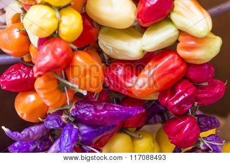 Healthy Vegetables Tomatoes And Hot Pepper Closeup Landscape