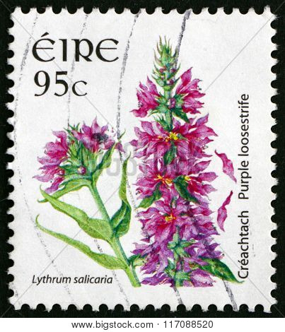 Postage Stamp Ireland 2007 Purple Loosestrife, Flowering Plant