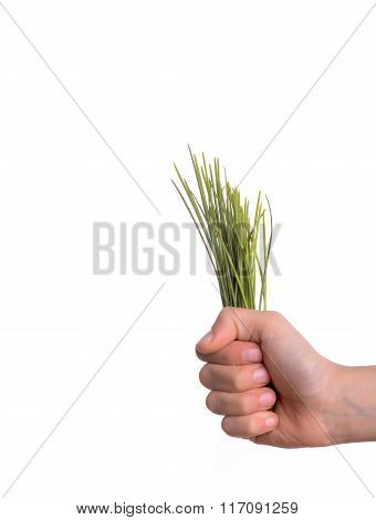 Bunch Of Grass In Hand