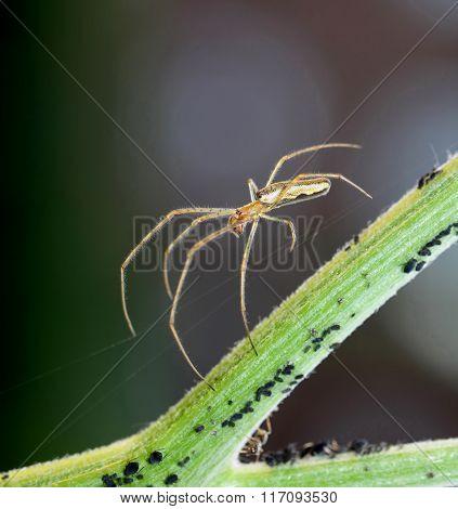 Spider walking on silk thread