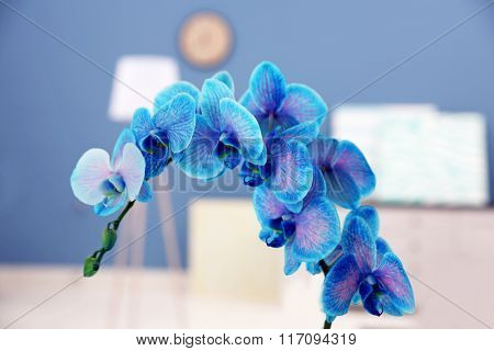 The blossoming branch of a blue orchid, close up