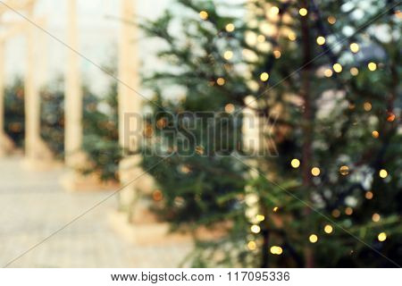 Christmas fir trees on blurred background