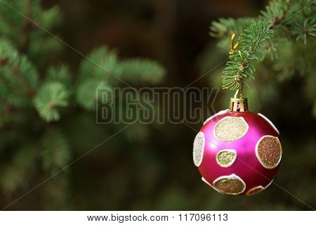 Christmas ball hanging on branch of fir tree close up