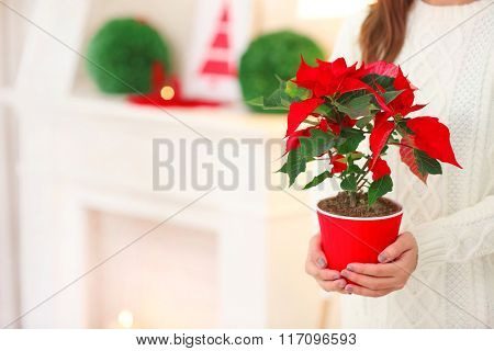 Woman holding pot with Christmas flower poinsettia, on light background