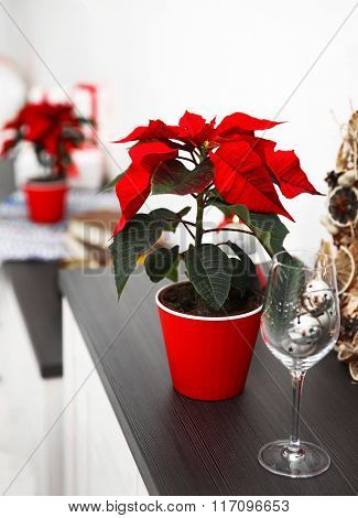 Christmas flower poinsettia and decorations on shelf with Christmas decorations, on light background