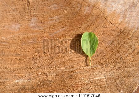 Yellow leaf on wooden textured background