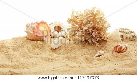 Beautiful shells and coral  on sand against white background