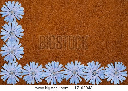 Blue chicory flowers and powder of instant chicory texture