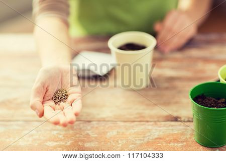 close up of woman hand holding seeds