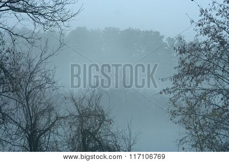 Mist on Lake and Trees in Park