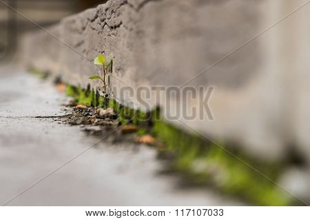 Single Plant Growing Through Crack In Concrete Steps