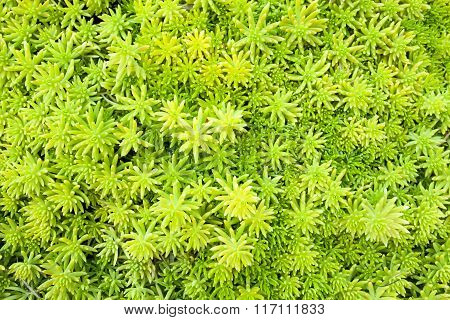 Green Plant Leaf Texture Background