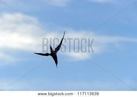 Bird Flying Silhouette Isolated