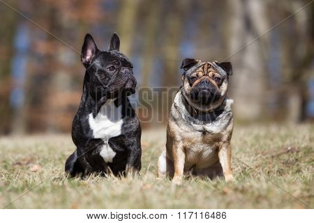 Two Dog Outdoors In Nature