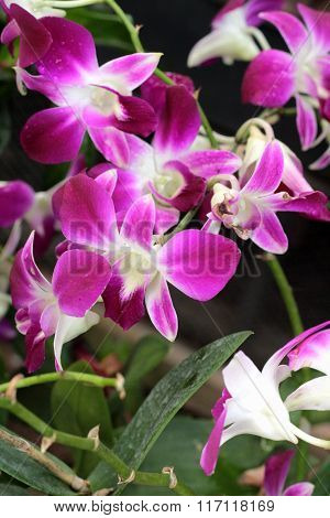 Orchid Flowers With The Nature.