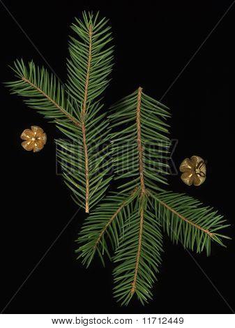 Spruce Runes