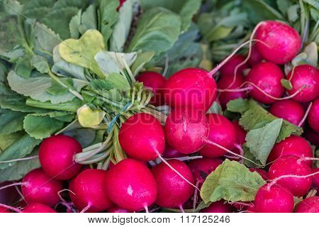 Freshly picked radish
