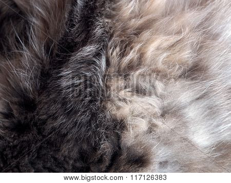 The texture of fur
