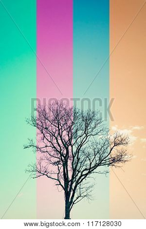 Silhouette Leafless Tree In 4 Color Line Style