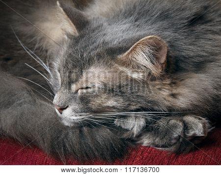 The cat is sleeping