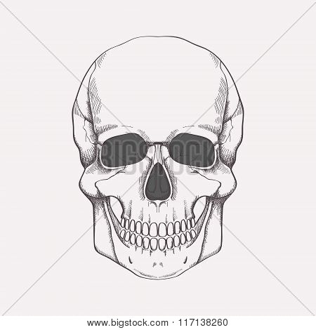 Vector monochrome illustration of human skull. Halloween backdrop
