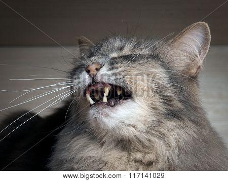 The cat hisses