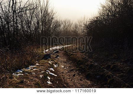 Depressive Forest Path,  Forest Path In Winter With A Bit Of Snow, Melancholy Way At Dawn, Forest Pa