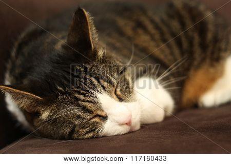 sleeping sweet cat