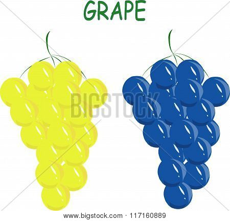 Yellow and blue grape, green roots on white background, hand drawing, painting