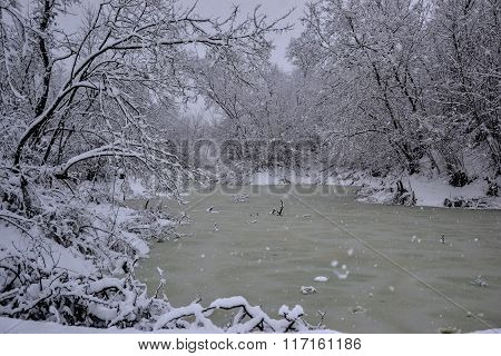 Frozen Swamp In Winter. Trees Covered With Snow. Extremely Low Temperatures. Heavy Snowfall. Slovaki
