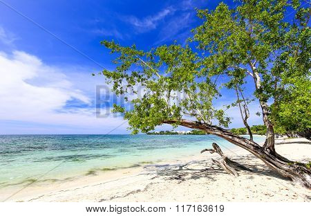 Tropical Sand Beach With A Green Tree, Caribbean.