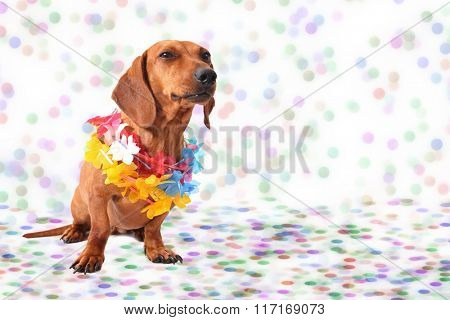 Dachshund at Carnival Party time background