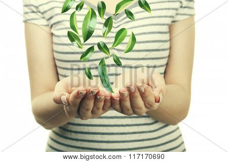 Green leaves falling into woman hands, isolated on white