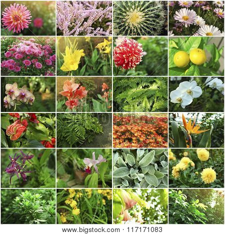 Collage with beautiful flowers and plants in the garden.