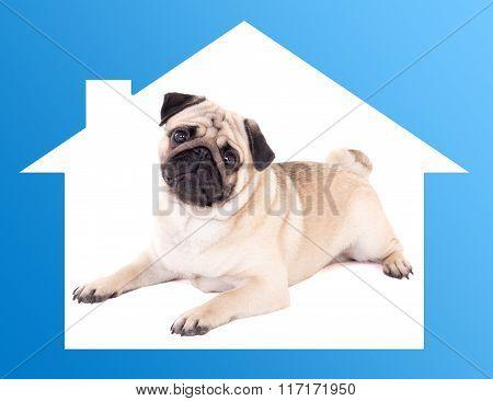 Safe Home Concept -pug Dog Lying In Blue House Frame