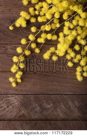 Fresh mimosa flower on wooden table