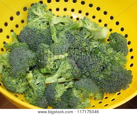 Fresh Organic broccoli florets in colander after rinsing