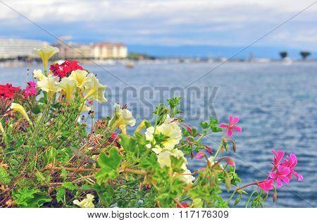 Summer Flowers And Lake Leman, Geneva
