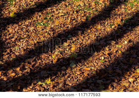Shadows From Trees On Fallen Autumn Leaves