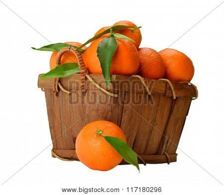Basket Of Ripe Mandarins.