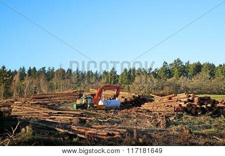 Logging - Vancouver Island, Canada