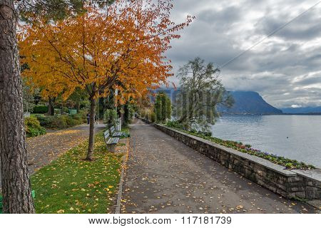 Yellow tree on Lake Geneva in Montreux,  Switzerland