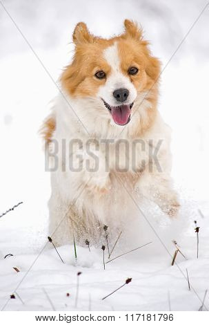 Happy dog in the white snow