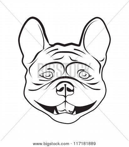 Head Of French Bulldog