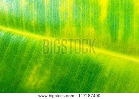 Natural pattern with green leaf