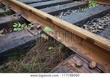 Old Railroad Tracks And The Green Grass